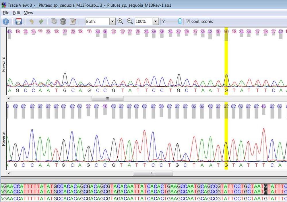 Comparing DNA Sequences for Pluteus primus