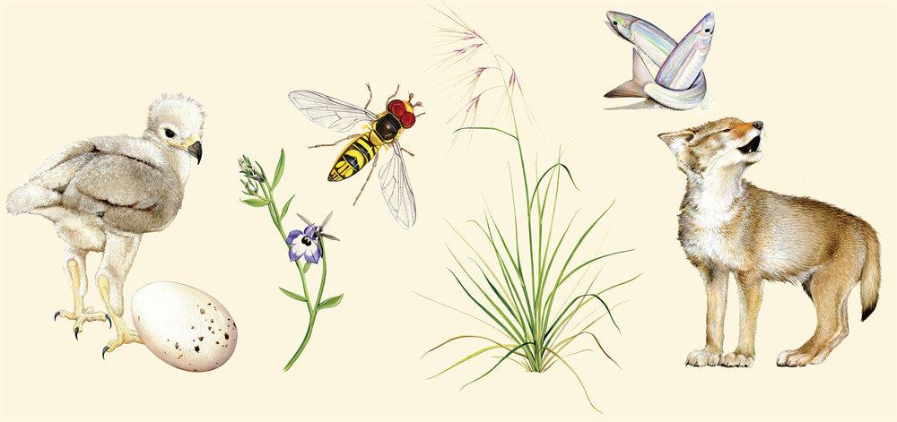 Spring almanac illustrations by Jane Kim