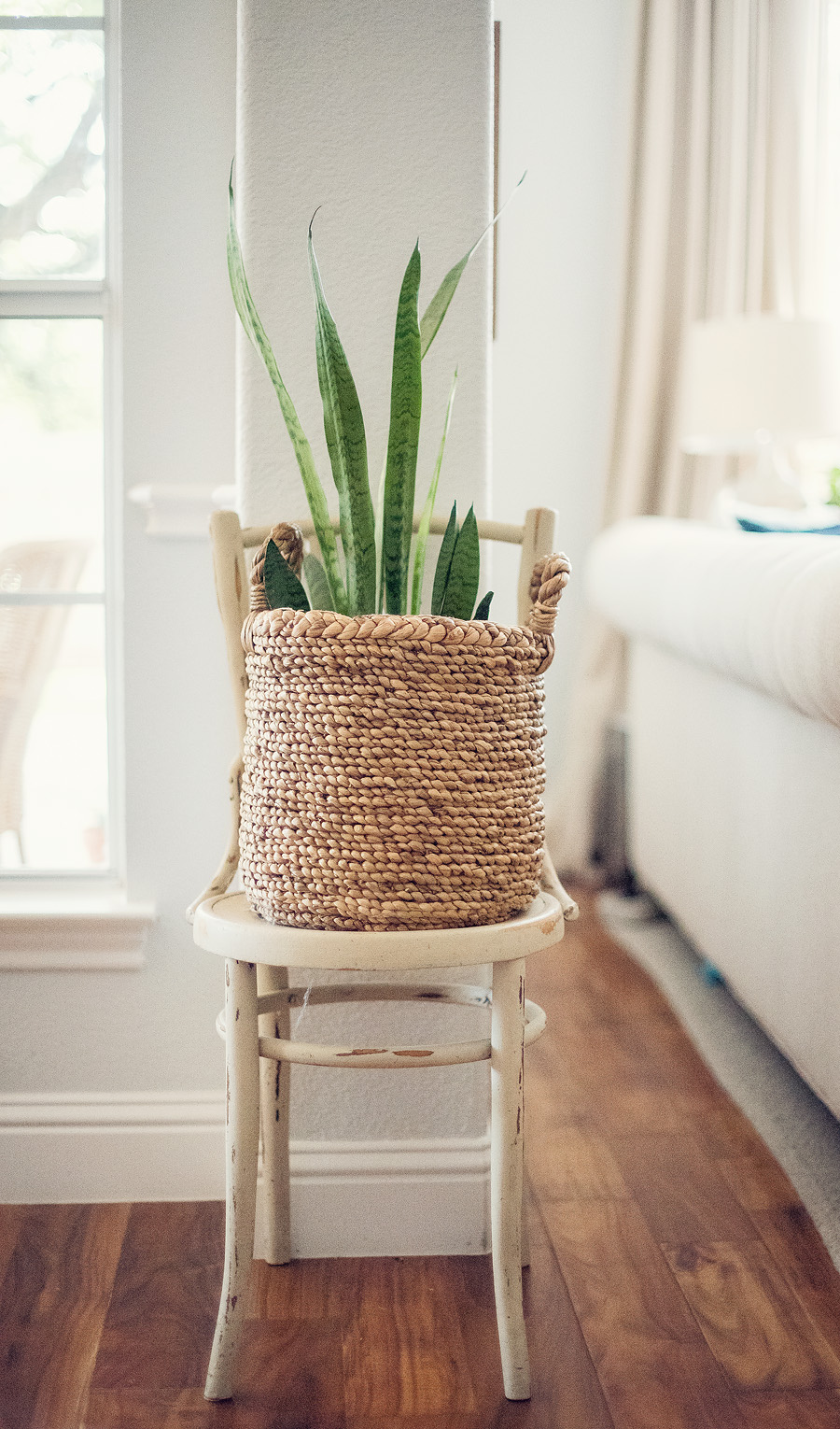 I love adding texture to our family room with this snake plant and basket.