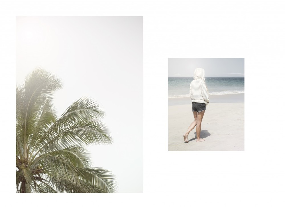 Hawaii-Palme2-1024x753.jpg