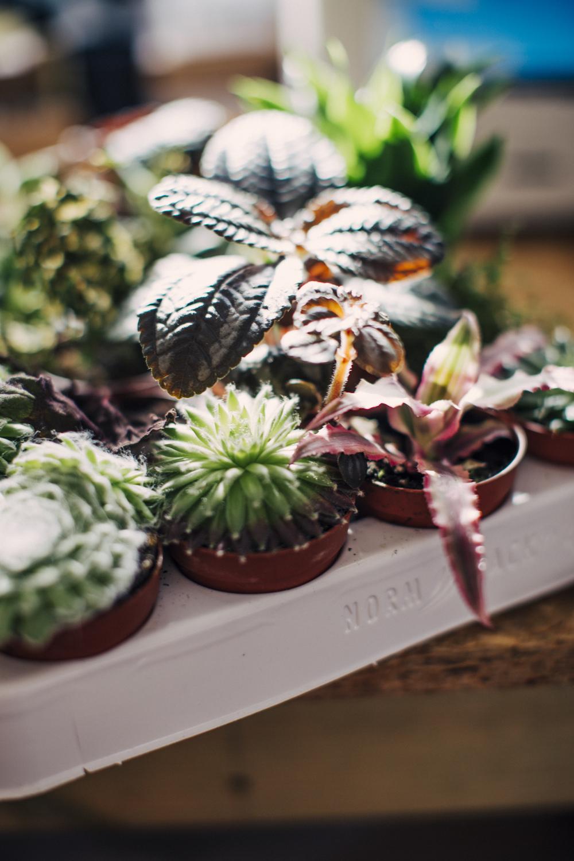 cactus © La Cabine de Margaux.jpg