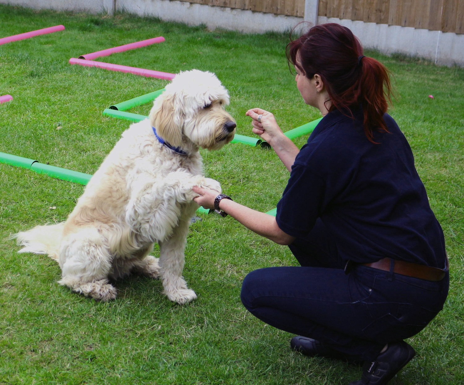 helping hands veterinary physiotherapy | contact