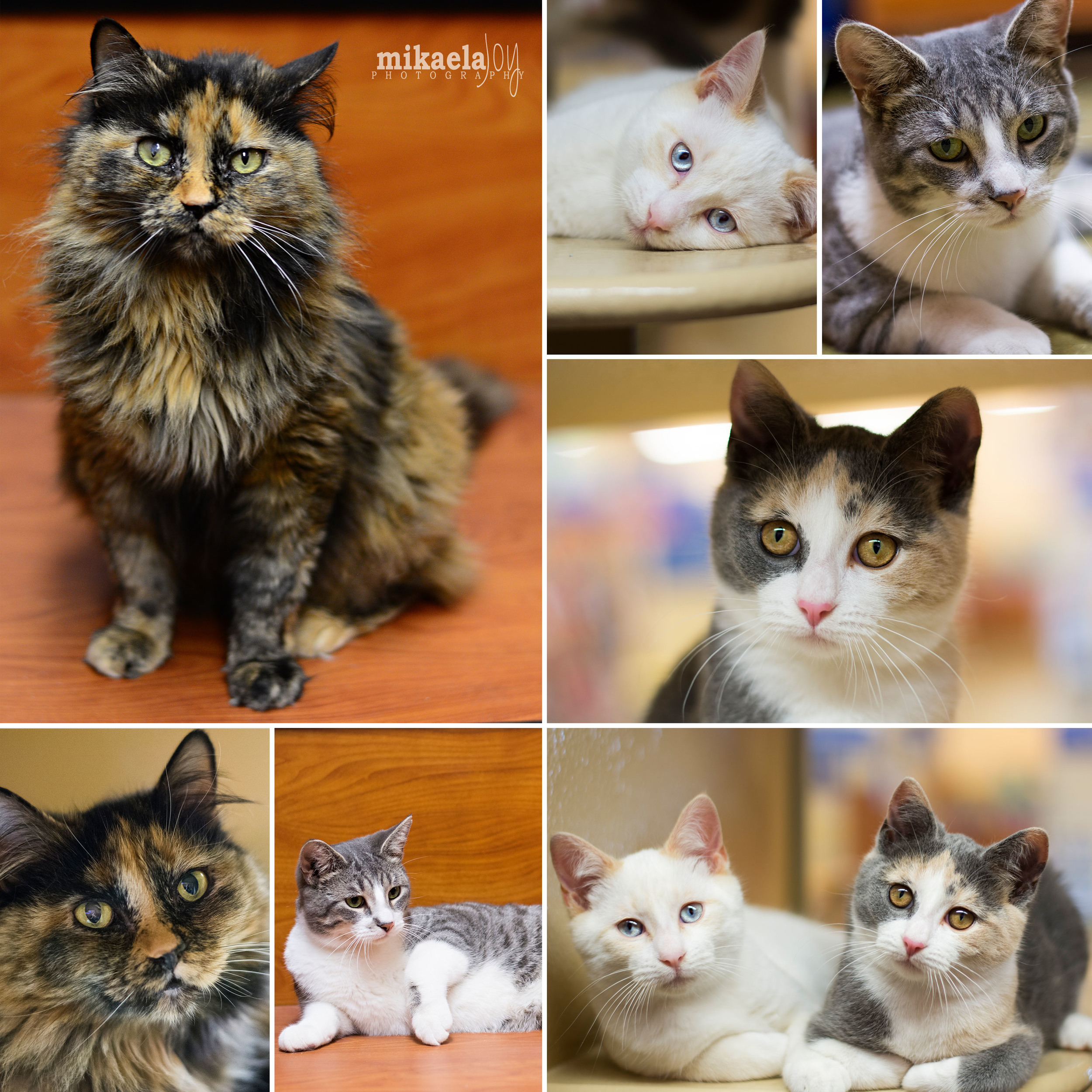 Petsmart Adoptables