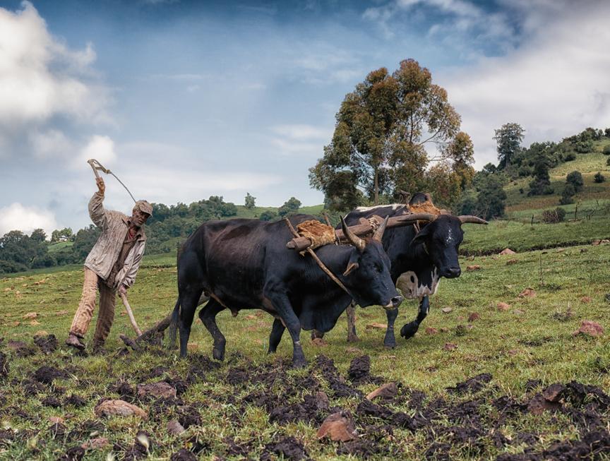 Ethiopia copyright maxVmax-33.jpg