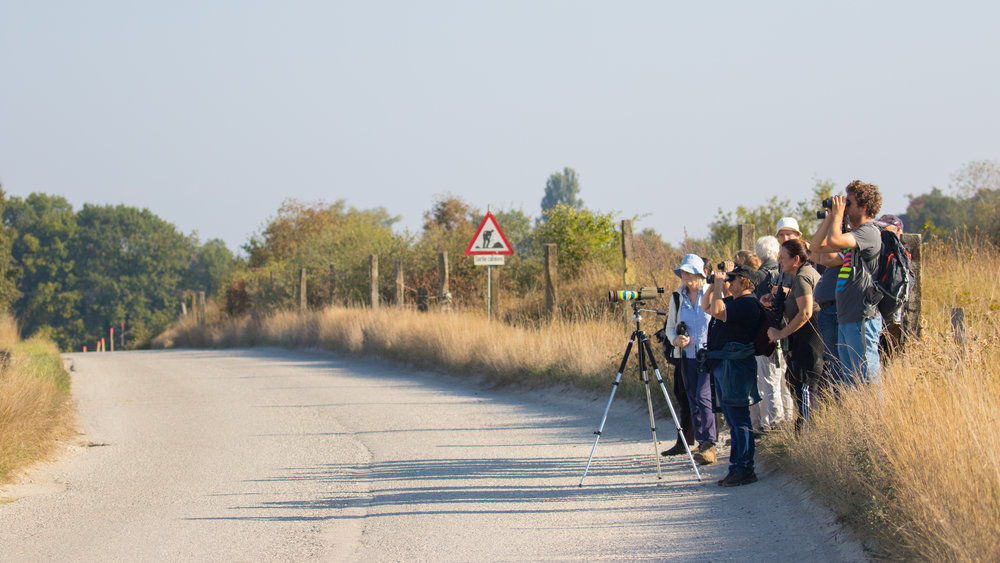 Participants looking at European Goldfinches (Carduelis carduelis)