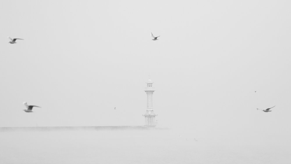Black-headed Gulls (Larus ridibundus) flying in front of the lighthouse on Lake Geneva.