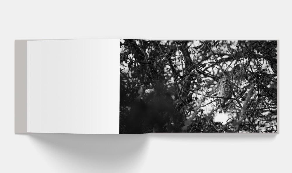 Horizontal_Book_Mockup_3-2.jpg
