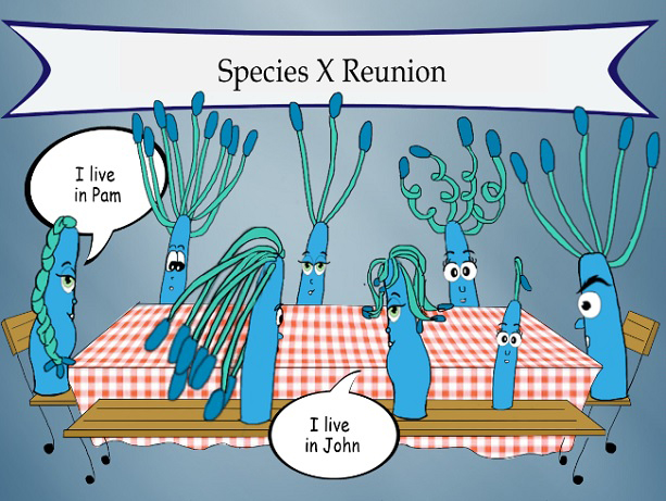 Gut microbiomes from different people can contain similar microbial species, but different strains, as this cartoon illustrates. Credit: Dana C. Thomas/University of Washington // medicalxpress.com