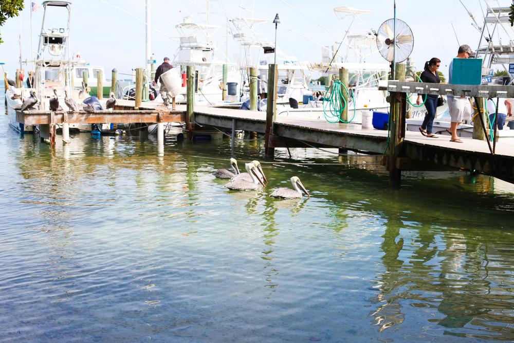 Florida Keys 2014-8.JPG