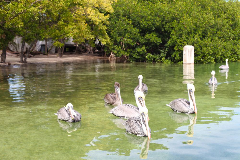 Florida Keys 2014-10.JPG