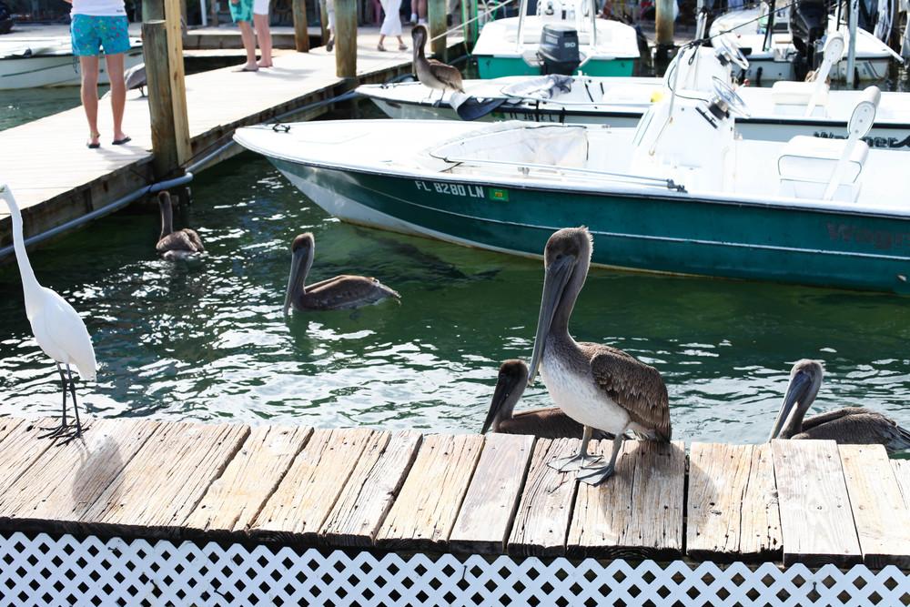 Florida Keys 2014-20.JPG