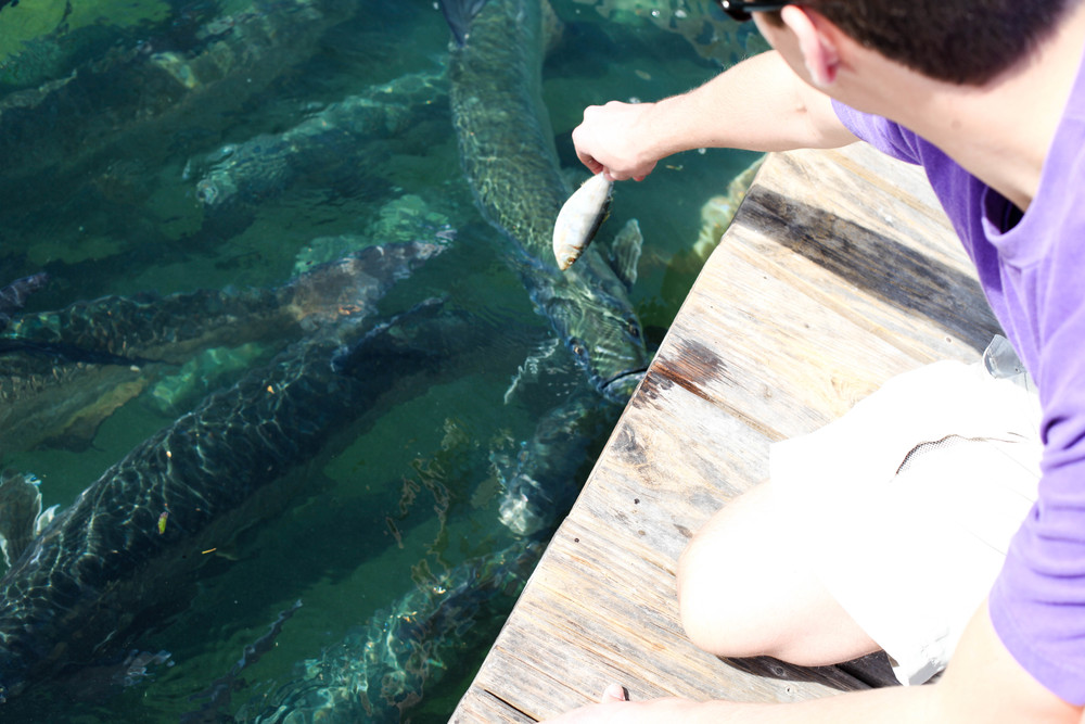 Florida Keys 2014-24.JPG