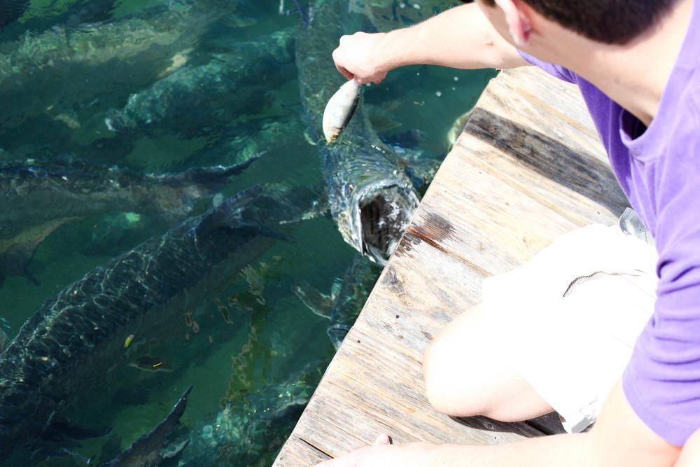 Florida Keys 2014-25.JPG