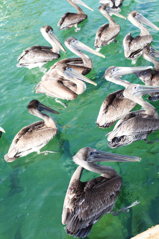 Florida Keys 2014-28.JPG