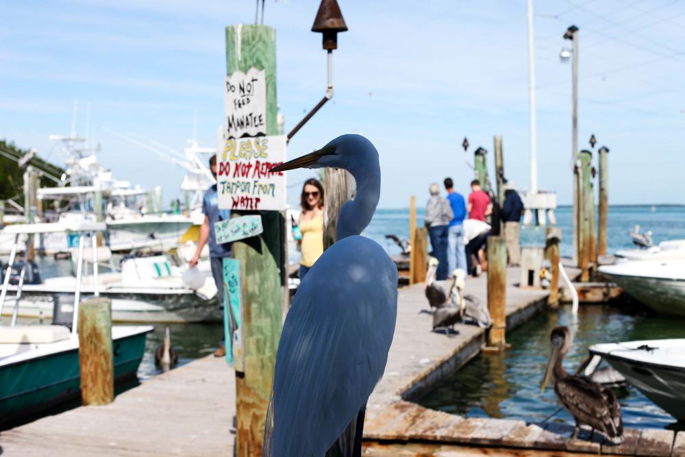 Florida Keys 2014-36.JPG