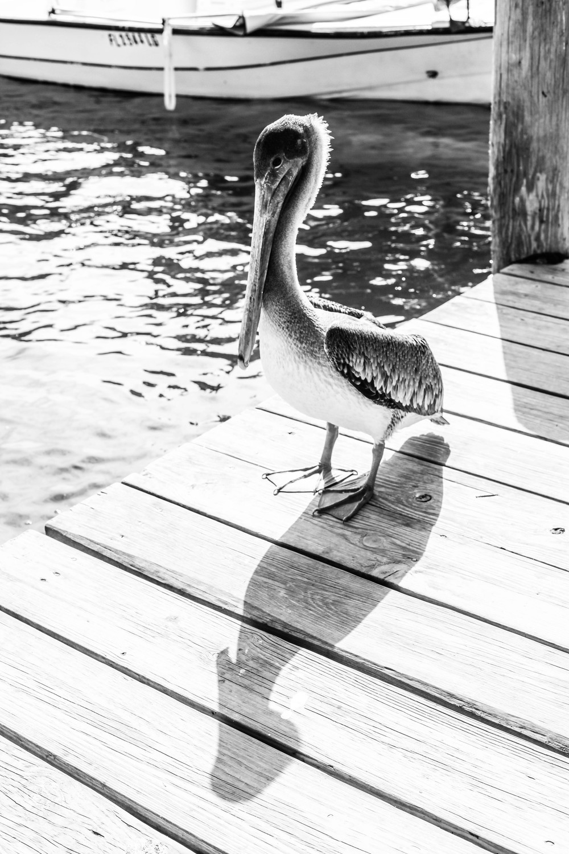 Florida Keys 2014-35.JPG