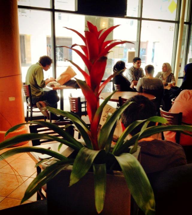 Cuban Cafe Chicago Loop