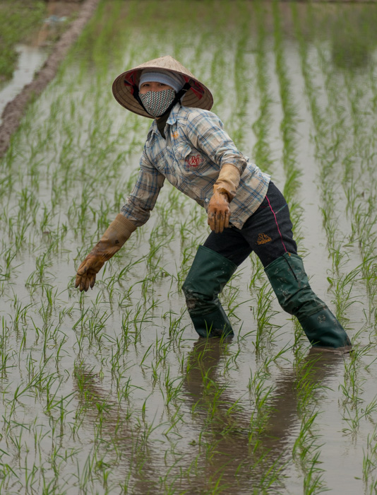 Field worker, Vietnam