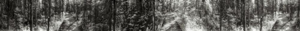 Spruce Bog Trail, 1