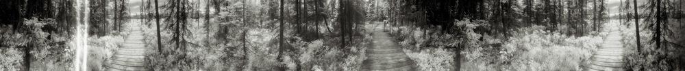 Spruce Bog Trail, 2