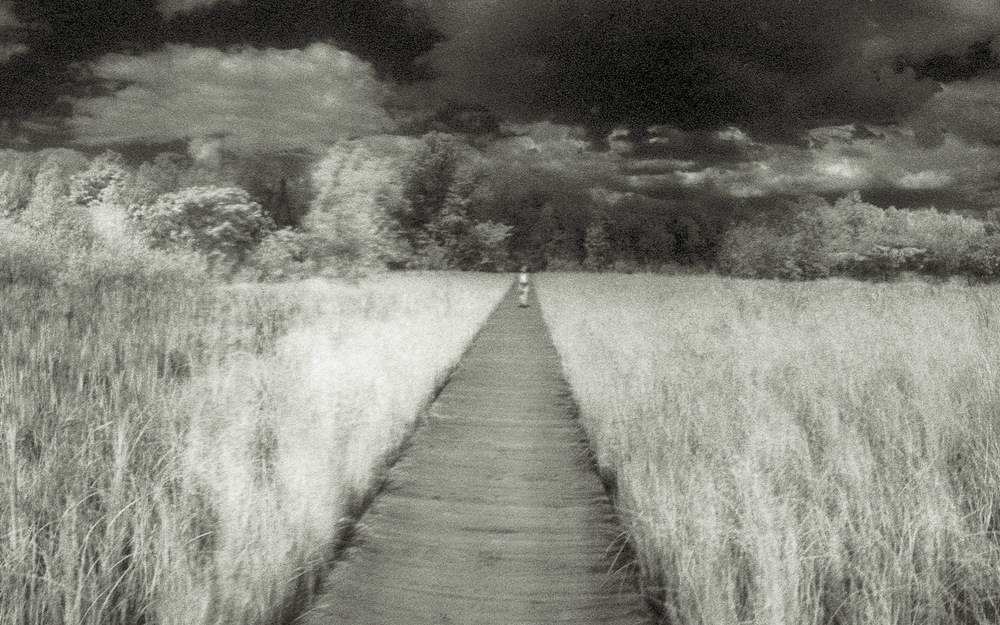 Boardwalks through a marsh - detail