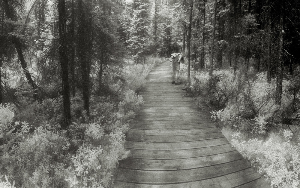 Spruce Bog Trail, 2 - detail