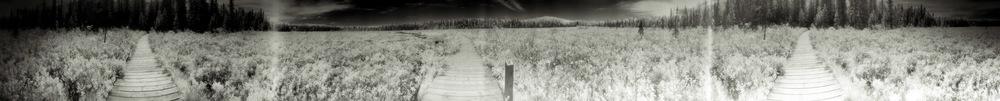 Footprints-d-4.jpg