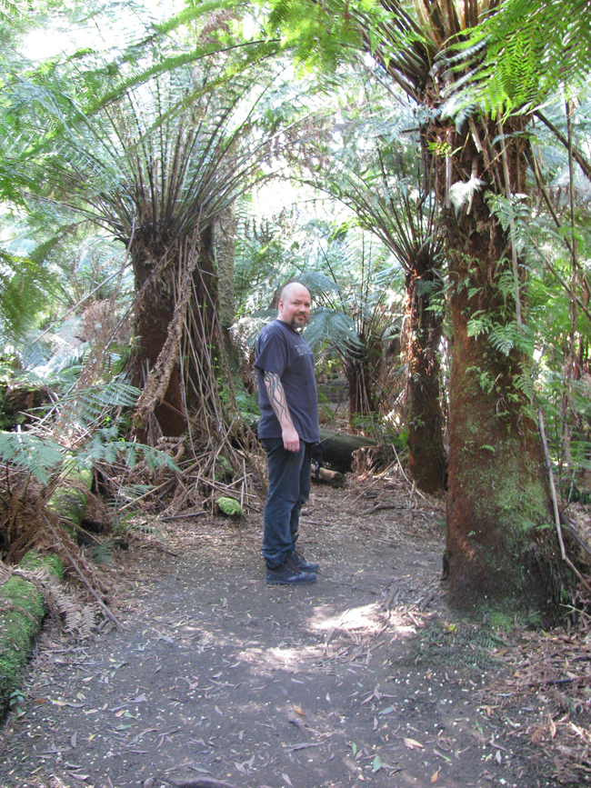 A rare sighting of the Ed husband among the towering tree ferns at Triplet Falls.
