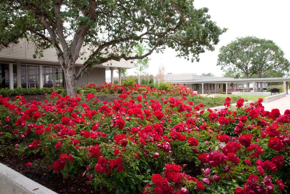 31  Colorful plantings echo one of North High's school colors_W.jpg