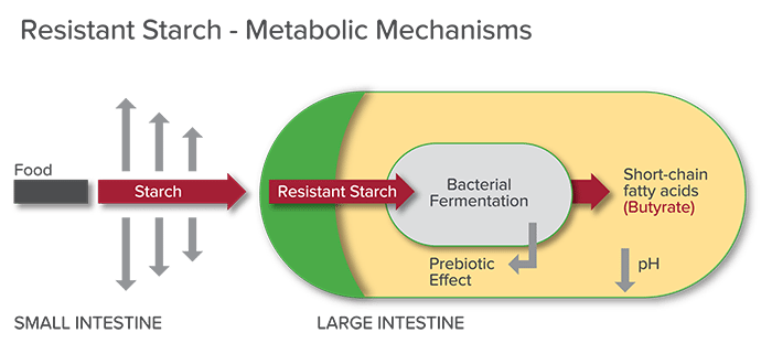 Resistant-Starch-kelly-aiello-rhn