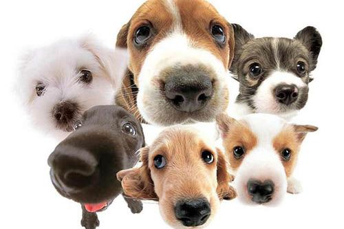 lotsofdogs.jpg