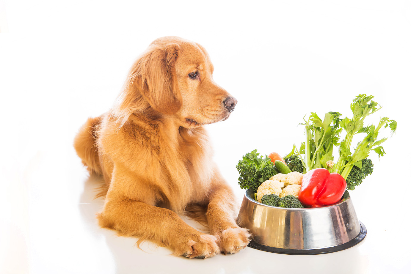 Diet And Nutrition Canine Cancer