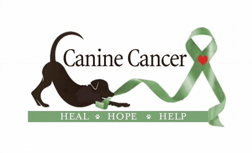 Image result for canine WITH cancer