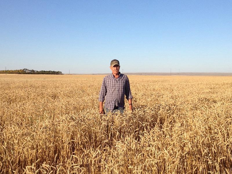 medina_grain_farmer.jpg