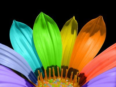tropical colors 2.jpg