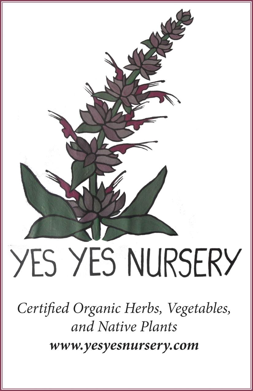 yes yes nursery ad .jpg