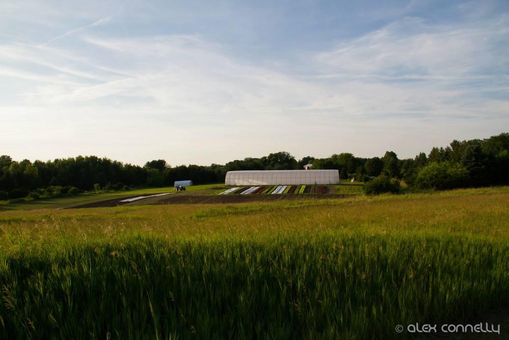 farm daytime.jpg