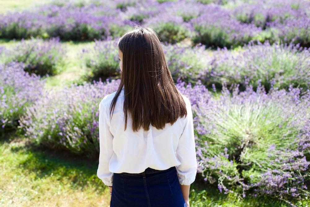 lavender-field - 5.jpg