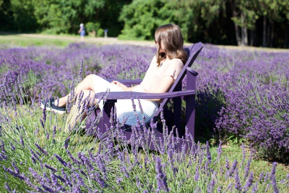 lavender-field - 1.jpg