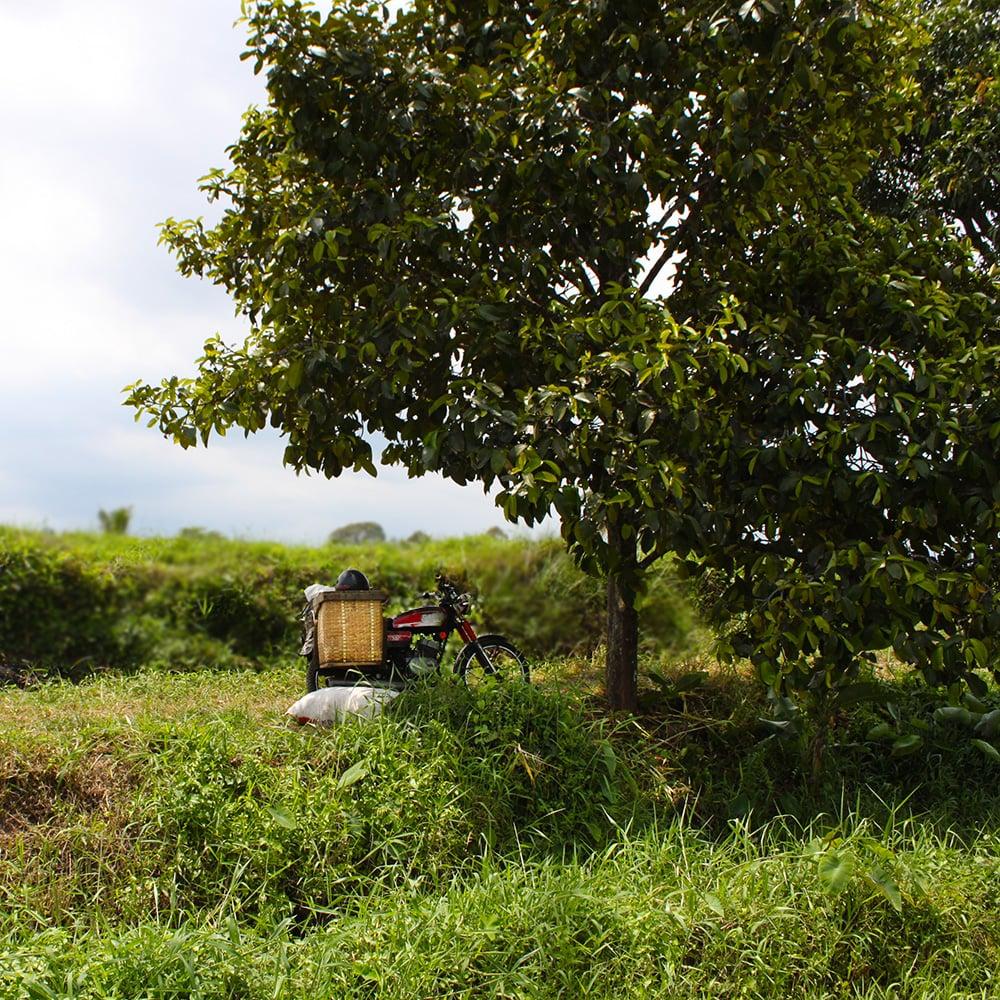 ricefield7.jpg
