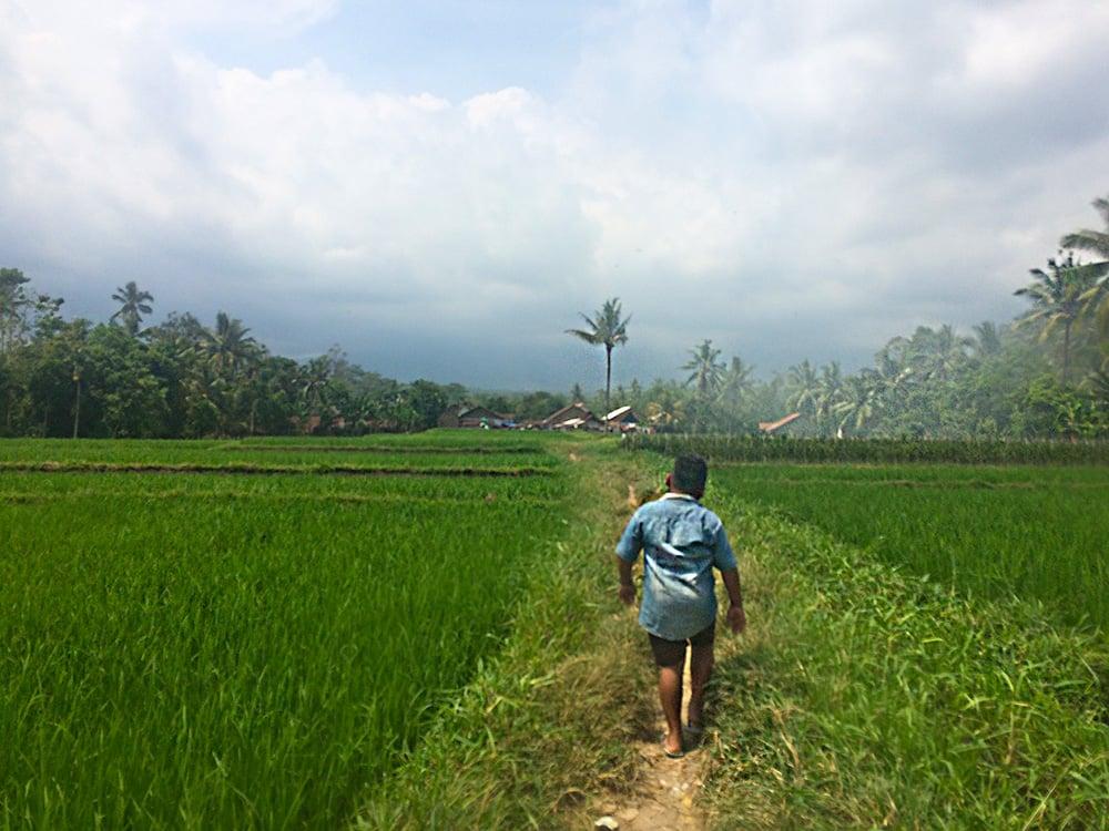 ricefield10.jpg