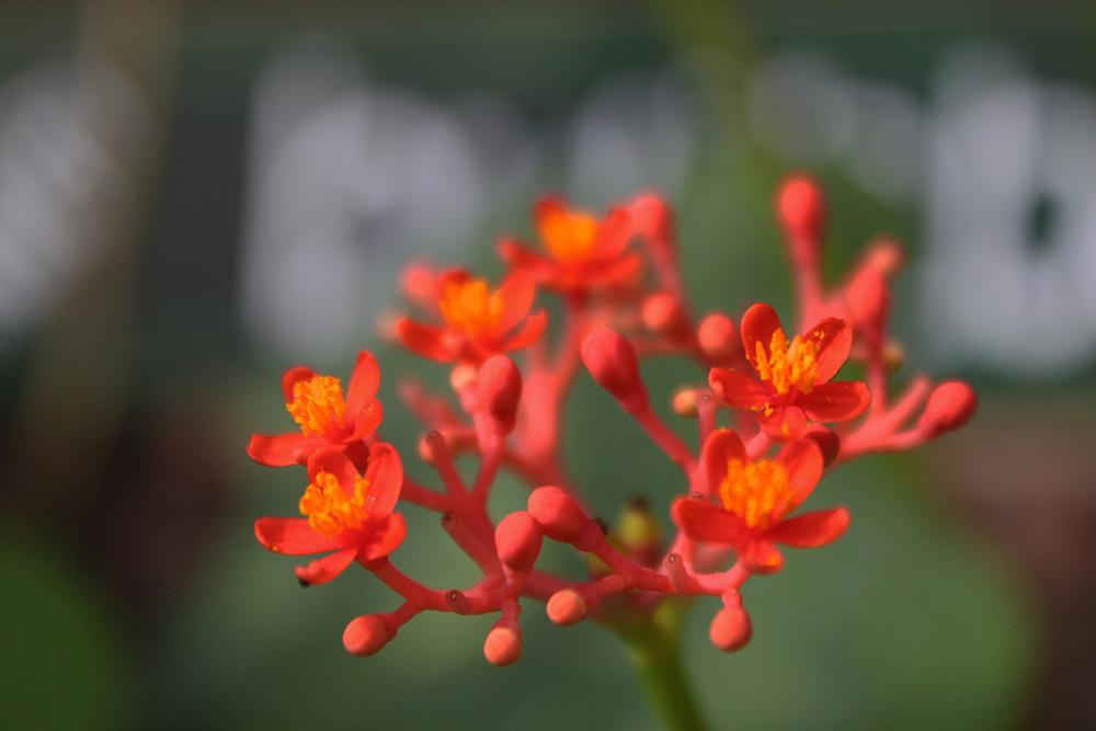 Amed_Flowers.jpg