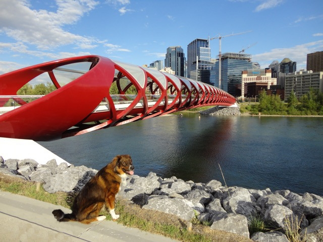 Peace bridge.jpg