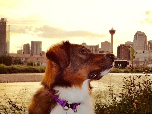 Calgary Tower3.jpg