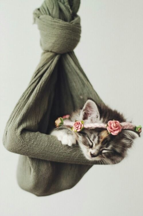 Flower Crowned Kitten