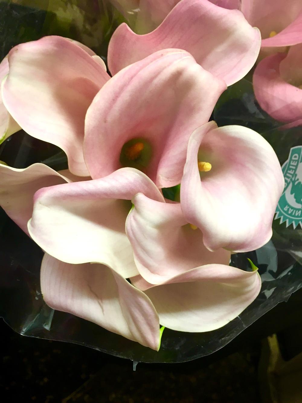 NYC Flower Market's Best - Dutch Flower Line