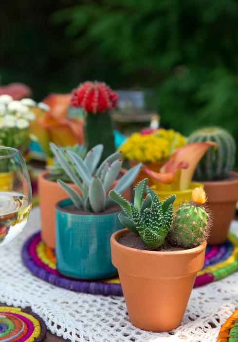 Mini Cactus - B Floral
