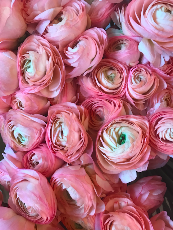 Pretty Pink Flowers - B Floral