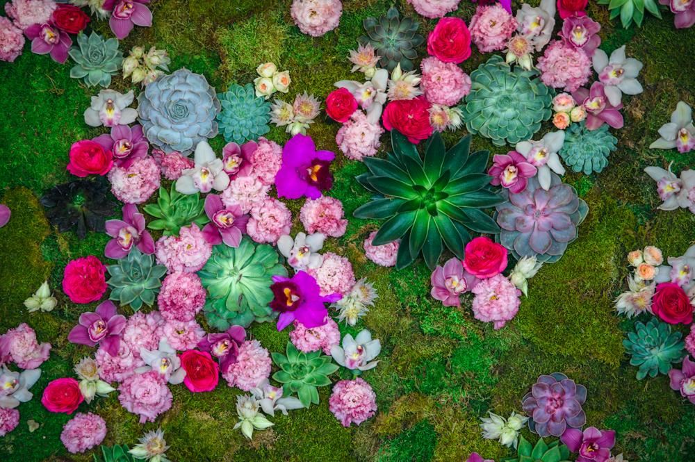 Vibrant Floral Detail Close Up - B Floral