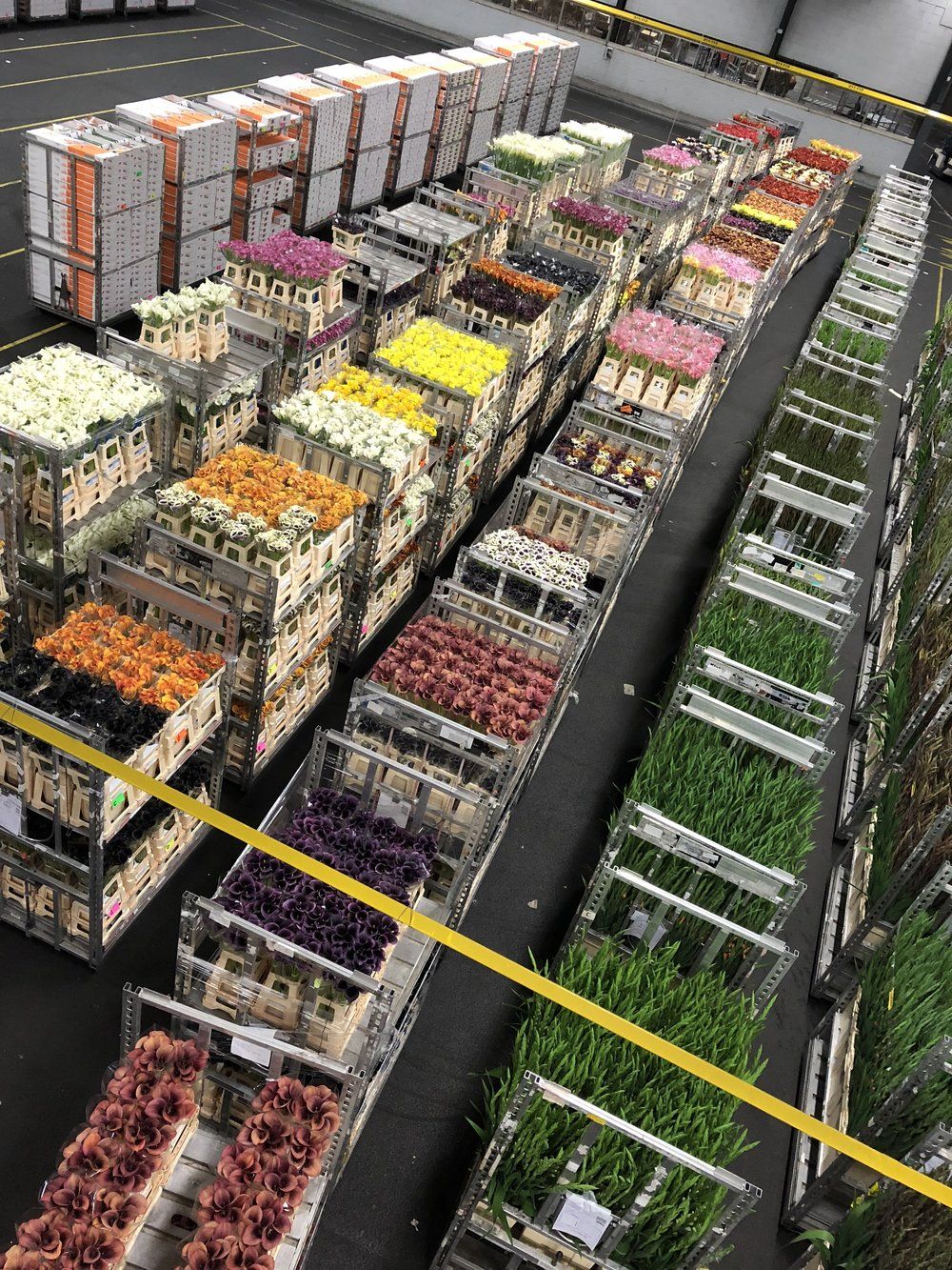 Aalsmeer Flower Auction - B Floral